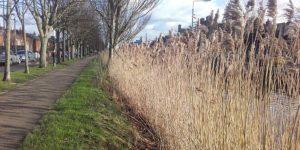 canal-rushes-st-brigids-day-crosses-irelandways
