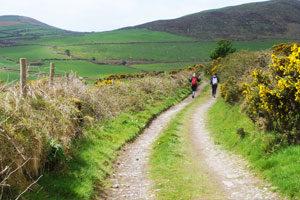 Annascaul-to-Dingle---Kerry-Camino---IrelandWays