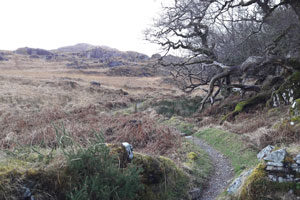 Kerry-Way,-Wilderness,-mountains,-path