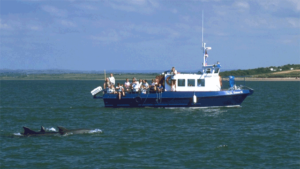 Shannon-Estuary-Dolphins-Wild-Atlantic-Way-Ireland-Ways