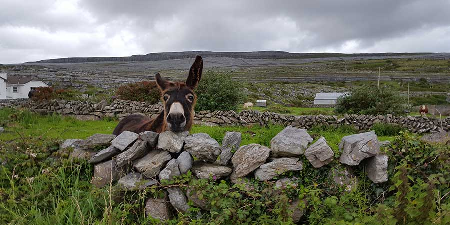 wildlife-on-the-burren-greenlife-fund-ireland-ways