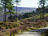 walkers-wicklow-way-hikes-in-ireland-ways