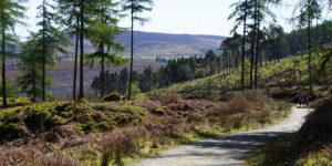 walkers-wicklow-way-hikes-in-ireland-ways